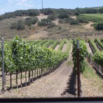 Santa Barbara Getaway- Part 4- Foley Wines and Ollalieberry Cobbler