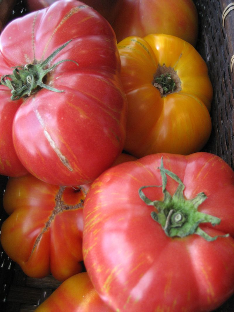 Heirloom Tomatoes for the Santa Monica Farmers Market