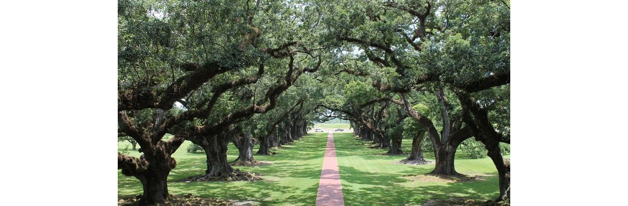 My (Slightly Uneasy) Visit to Oak Alley Plantation