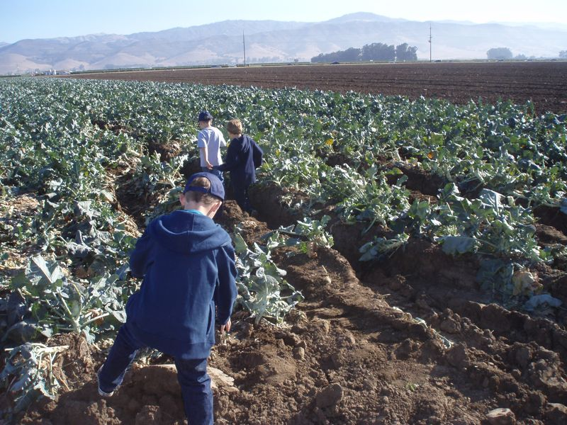 Gleaning in Salinas